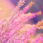 幸せになると決めると、潜在意識が願いを叶える